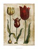 Antiquarian Tulips II