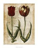 Antiquarian Tulips IV