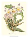 Lavender Orchids I