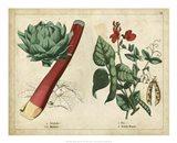 Kitchen Vegetables & Roots II