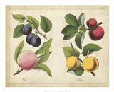 Kitchen Fruits I