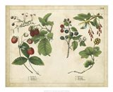 Kitchen Fruits II