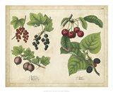 Kitchen Fruits III