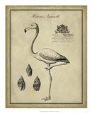 Antiquarian Flamingo