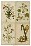 Botanical Montage II