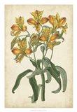 Botanical Display III