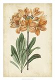 Botanical Display V