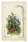 Victorian Butterfly Garden VII
