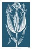 Chromatic Tulips I