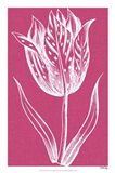 Chromatic Tulips V