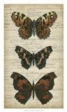 Butterfly Script II