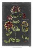Vintage Botanical Chart I