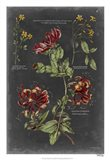 Vintage Botanical Chart II