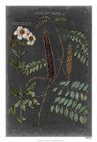 Vintage Botanical Chart V