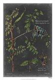 Vintage Botanical Chart VII
