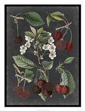 Orchard Varieties I