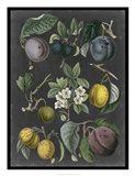 Orchard Varieties IV