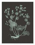 Mint & Charcoal Nature Study I
