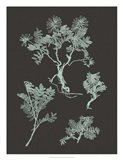 Mint & Charcoal Nature Study II