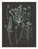 Mint & Charcoal Nature Study III