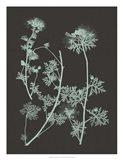Mint & Charcoal Nature Study IV
