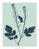 Indigo & Mint Botanical Study I