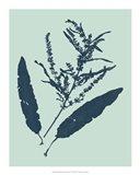 Indigo & Mint Botanical Study IV