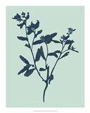 Indigo & Mint Botanical Study VII