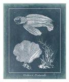 Azure Sea Turtle Study II