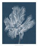Monochrome Tulip II