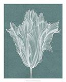 Monochrome Tulip V