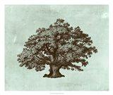 Spa Tree III