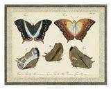 Bookplate Butterflies Trio III