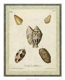 Bookplate Shells II