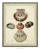 Bookplate Shells III