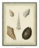 Bookplate Shells IX