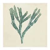 Chromatic Seaweed III