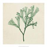 Chromatic Seaweed IV