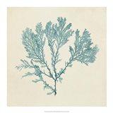 Chromatic Seaweed VIII