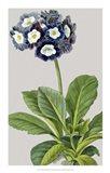 Vintage Garden Varieties IV