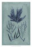 Indigo & Azure Seaweed I
