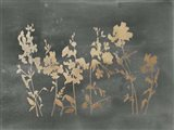 Gold Foil Flower Field on Black - Metallic Foil