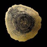 Gold Foil Tree Ring IV on Black