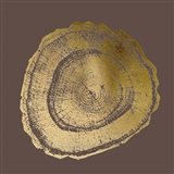 Gold Foil Tree Ring III on Bitter Chocolate