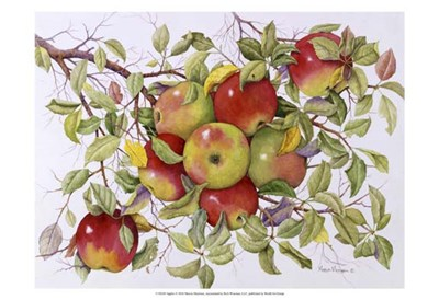 Apples Poster by Marcia Matcham for $21.25 CAD