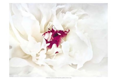 White Linen Peony II Poster by Rachel Perry for $21.25 CAD