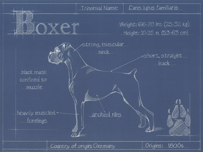 Blueprint Boxer Poster by Ethan Harper for $21.25 CAD