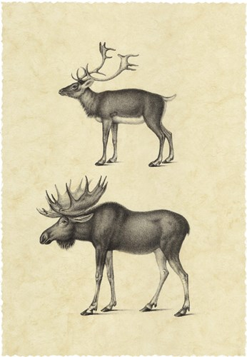 Vintage Elk Poster by Vision Studio for $66.25 CAD