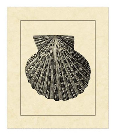 Vintage Shell II Poster by Vision Studio for $52.50 CAD