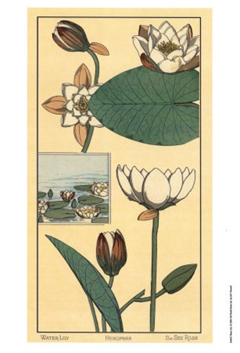 Water Lily I Poster by M. P. Verneuil for $21.25 CAD